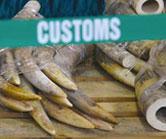 customs-ivory-web