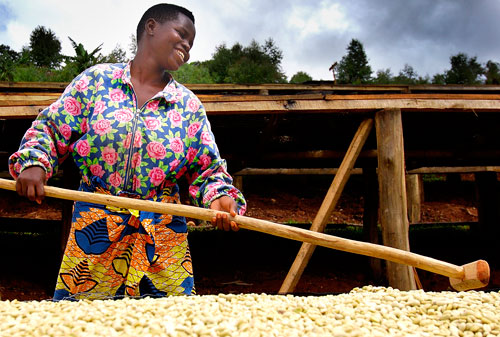 Rwanda_Maraba_Coffee_crop_small.jpg