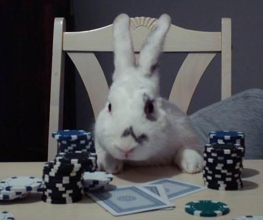 Rabbit Poker 2