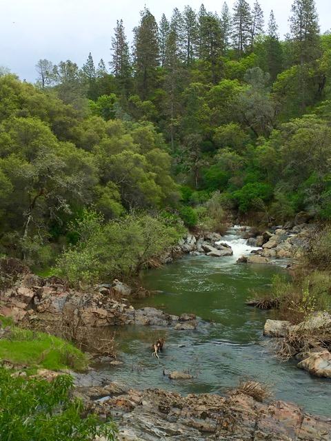 Wolf             Creek at Bear Confluence Josie 5