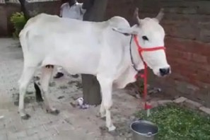 Cow Protection Should Be Fundamental Right said allahabad High court