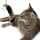 What Kind of Glue Is Used With Soft Paws for Cats?