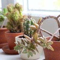 Windowsill Extender for Plants | eHow