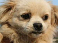 How to Train an Abused Dog - Pets