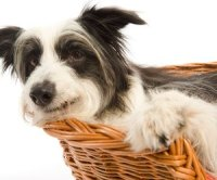 Why Do Dogs Dig the Carpet?   Dog Care - Daily Puppy