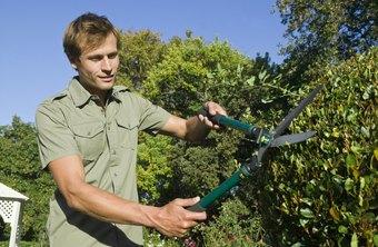 job requirements landscaping