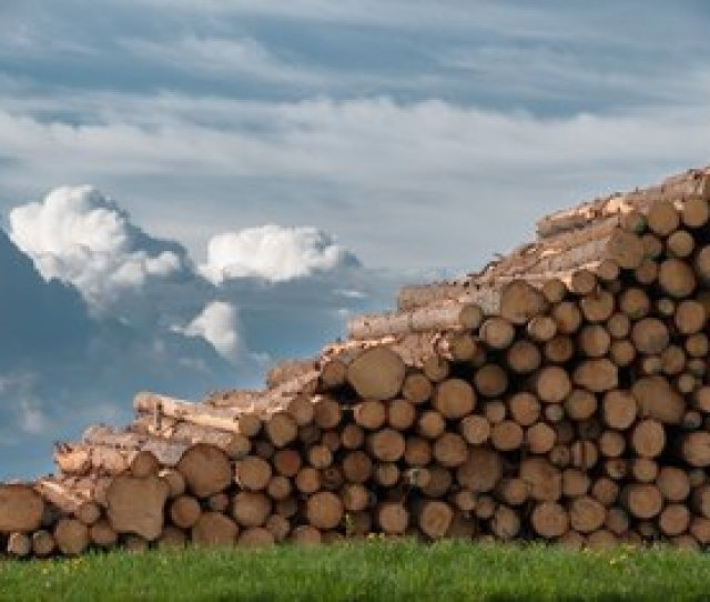 The Best Place To Put A Wood Pile In The Yard