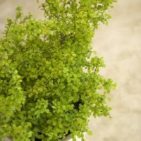 Is a Maidenhair Fern Toxic to Cats? | Home Guides | SF Gate