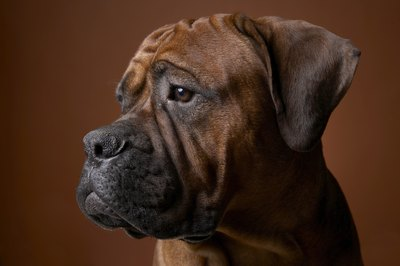 Puppies And Fall Wallpaper Reasons Why Boxer Puppies May Lose Their Hair Pets