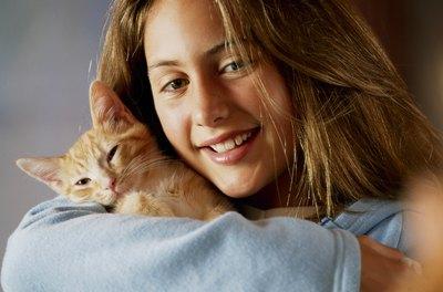 Why Do Cats Like to Snuggle  Pets