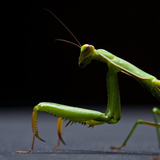 Praying Mantis Kung Fu Techniques  Healthy Living