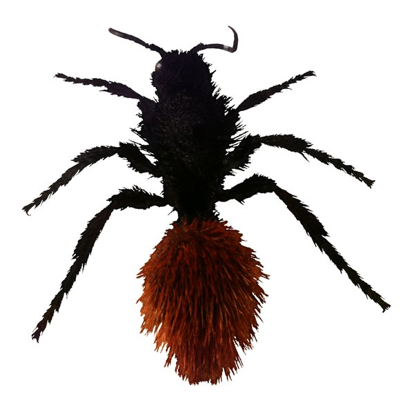 Red Velvet Ants Or Cow Killer