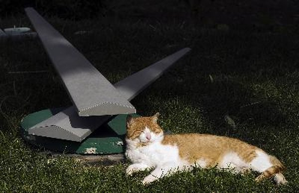 How To Keep Stray Cats From Spraying a Yard  Pets