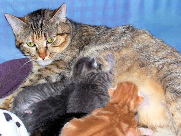 What Feed Nursing Kittens