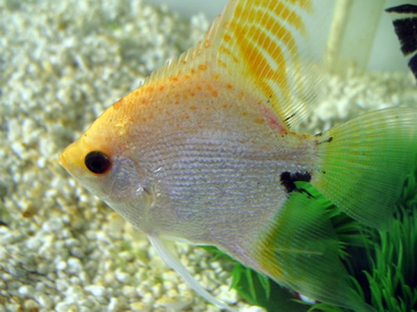 What Is Cold Water Fish