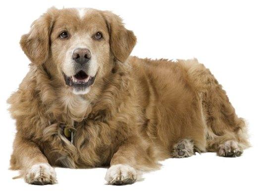 """Attēlu rezultāti vaicājumam """"male dog"""""""