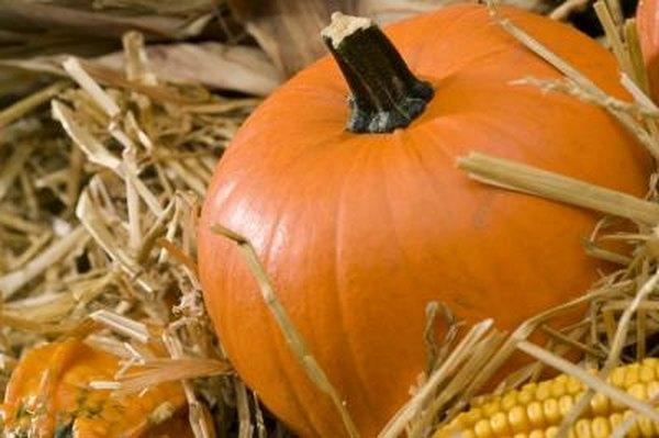 why do pumpkins turn