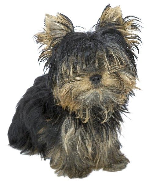 Ingrown Hair On Dog