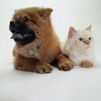 The Best Carpets for Pets - Pets