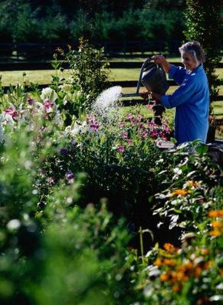 yard landscaping ideas water