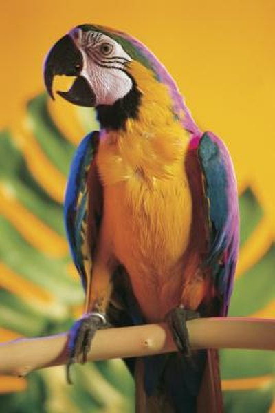 What Types of Woods Are Poisonous to Exotic Birds  Pets