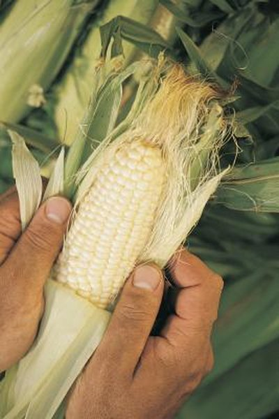 Benefits of Corn Silk  Woman