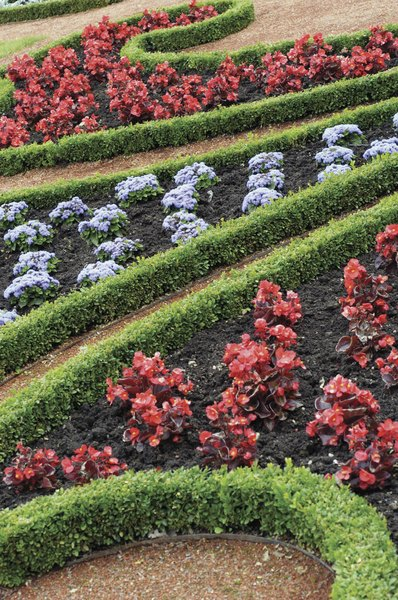 great southern hedge plants & landscape