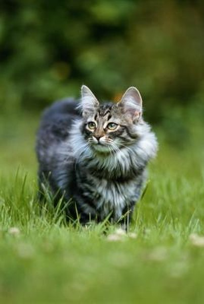 How to Stop Cats From Pooping in the Yard  Pets