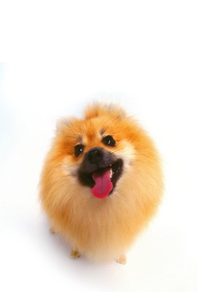 Different Style Haircuts For Small Dogs Pets