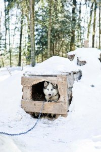 Alternative to Cedar Shavings for Dogs