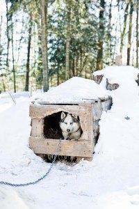 Alternative to Cedar Shavings for Dogs - Pets