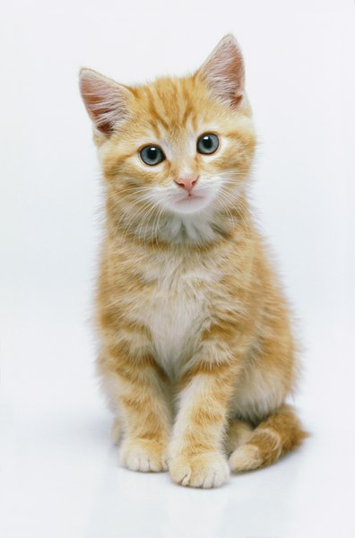 Do Kittens Cause Allergies?  Pets