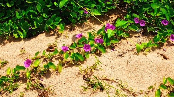 Hawaiian baby wood rose