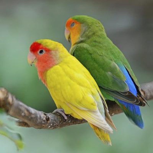 Fall Out Boy Flower Wallpaper How To Stop Biting In Lovebirds Pets