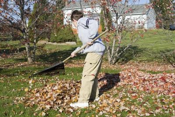 Easy Ways Rake Yard Leaves
