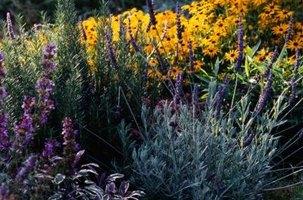 rosemary & lavender grow side