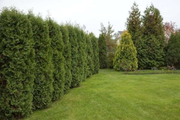 landscaping ideas privacy