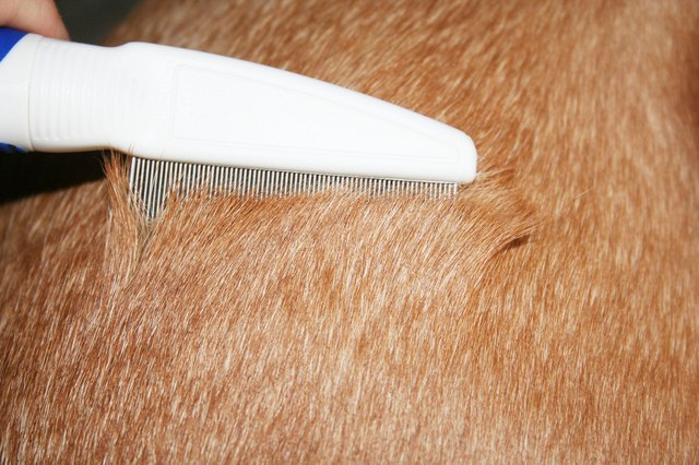 ... Treat Flea Dermatitis on Dogs With Over the Counter Medication | eHow