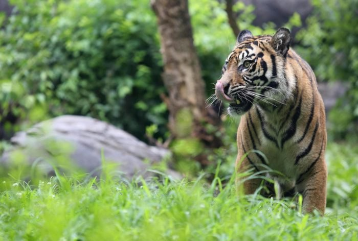 visit nashville zoo to