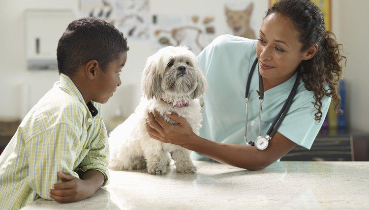 Types of Veterinary Jobs  Career Trend