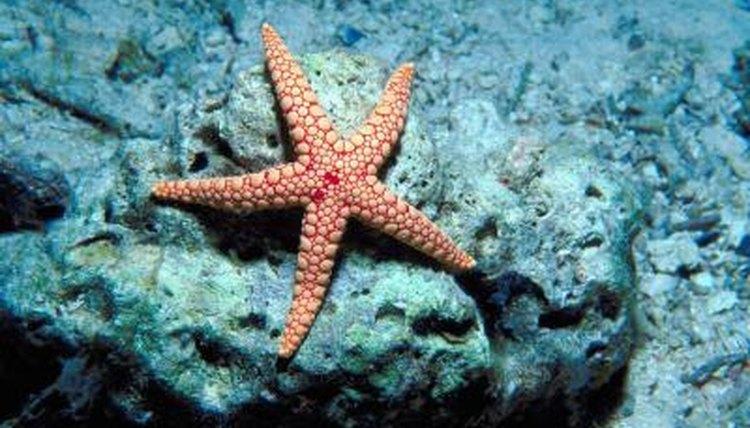 starfish their babies animals