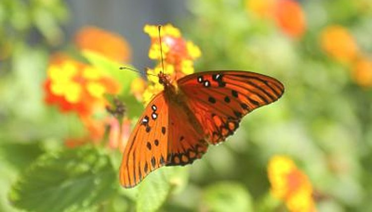 The Mutualism Relationships Of The Butterfly Animals