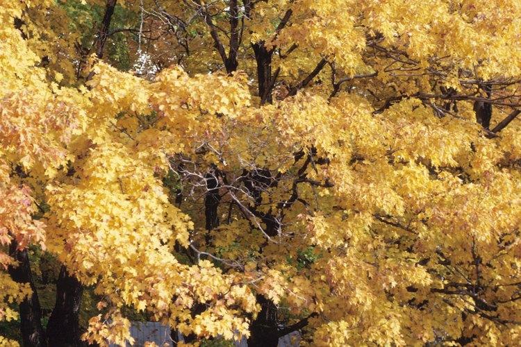 Las semillas tienden a reaccionar a eventos tales como incendios y reducir las tasas de germinación.