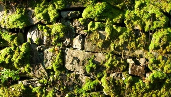 landscape with moss rock
