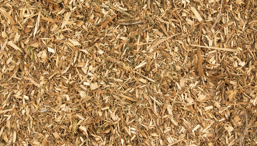 Is Eucalyptus Mulch Toxic To Plants? Garden Guides