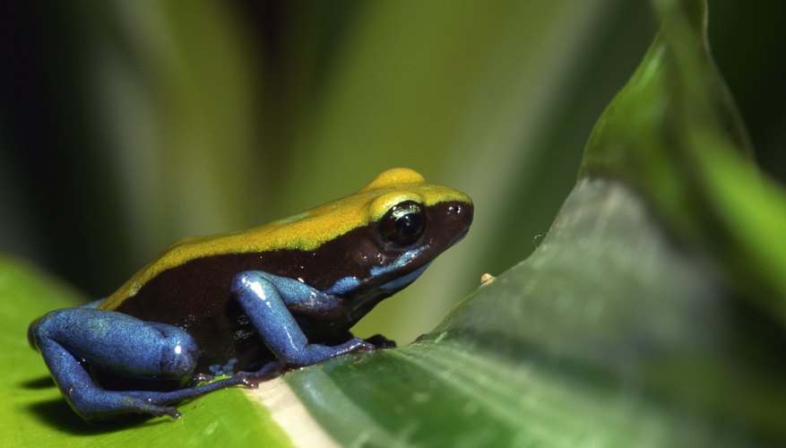 What Animals Show Commensalism In The Rain Forest? Sciencing