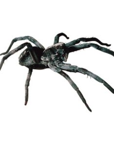 Wolf spiders are one of the most common large found in indiana also sciencing rh