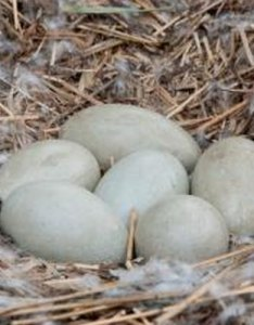 White bird egg identification also sciencing rh