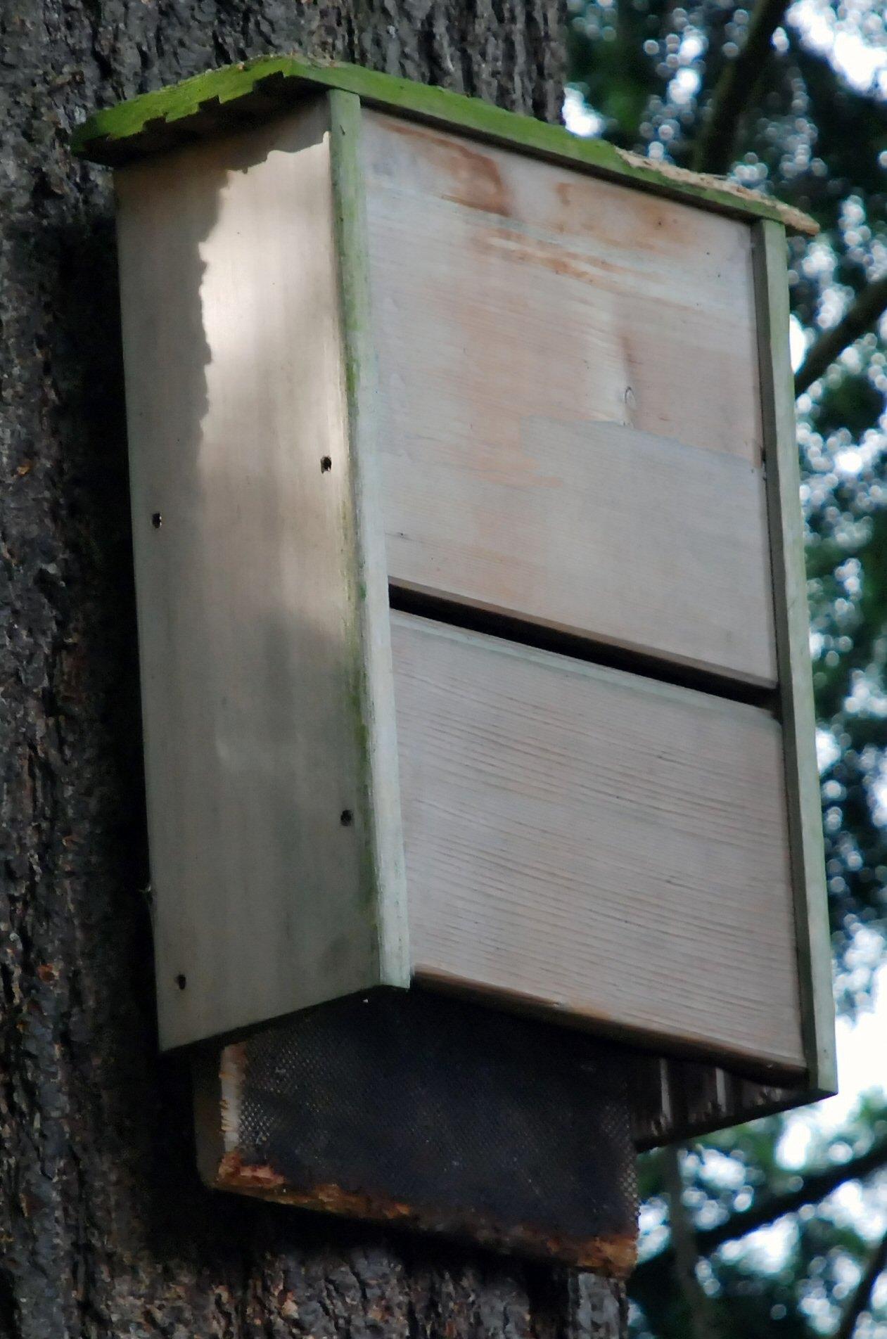 How To Make Bat House