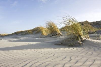 Wind creates ripples on a sandy beach.